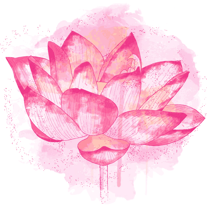 Lotus Flower Symbolism Zenned Out