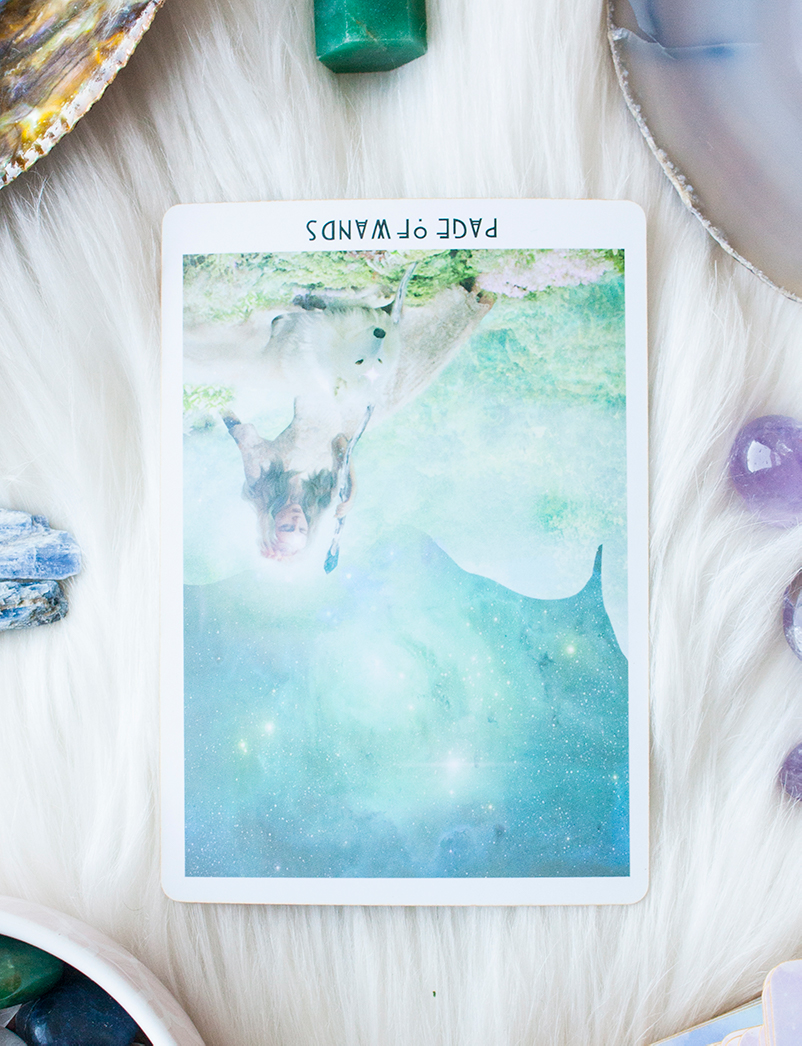 Page-of-wands-new-moon-tarotscope