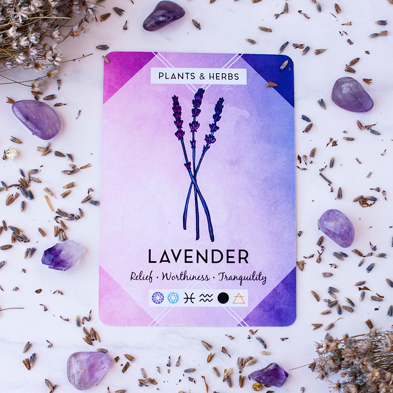Pic5-Lavender-ig